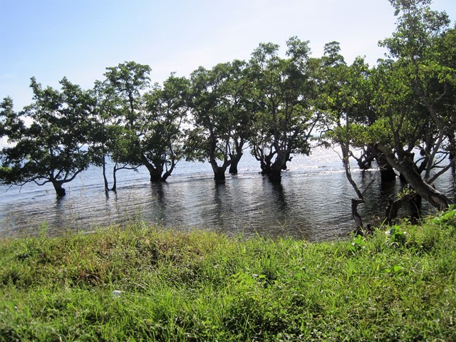 Tidore Indonesia árboles en agua