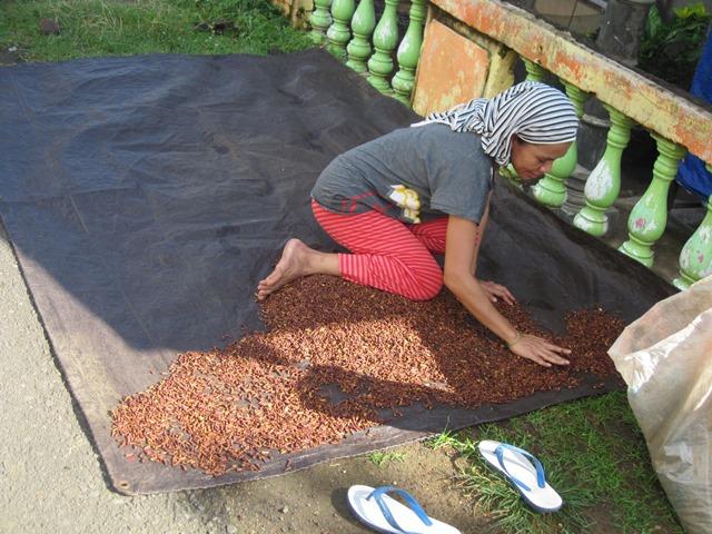 Tidore Indonesia especias clavo 3