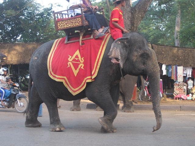 ANGKOR elefante 2