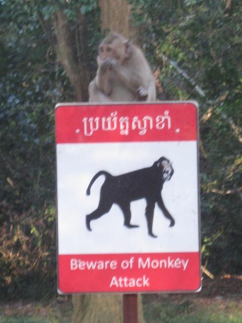 ANGKOR señal monos