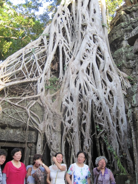 Angkor Ta Prohn Tomb Raider (10)