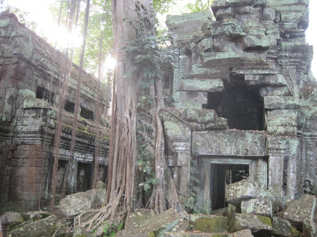 Angkor Ta Prohn Tomb Raider (12)