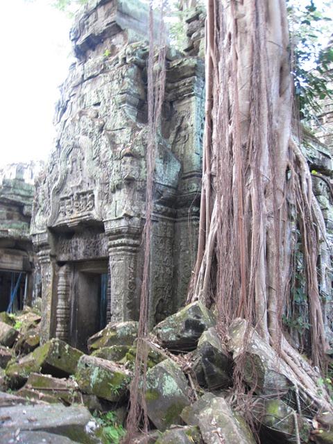 Angkor Ta Prohn Tomb Raider (18)