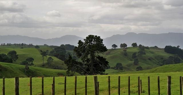 Hobbinton Nueva Zelanda (42)