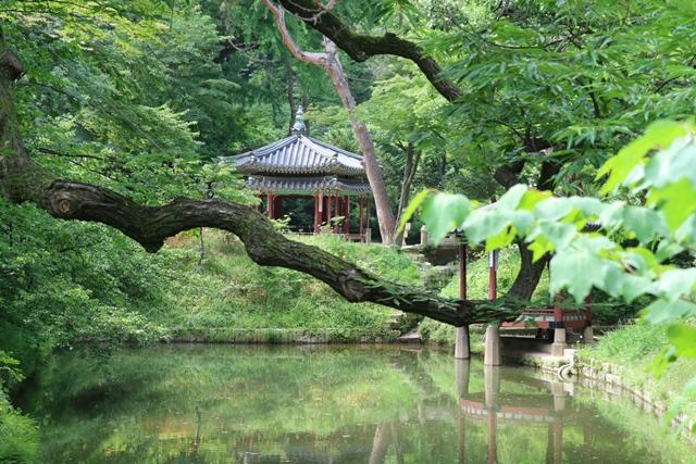 Palacio Changdeokgung Seul Corea del Sur (12)